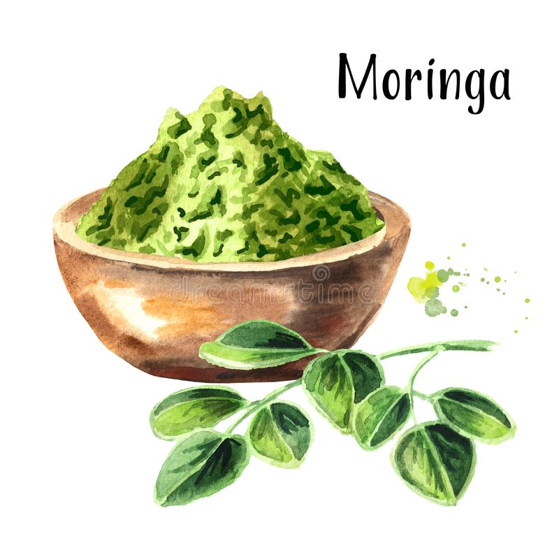 Herbal Moringa leaves with powder. Superfood. Watercolor hand drawn illustration isolated on white background. stock photography