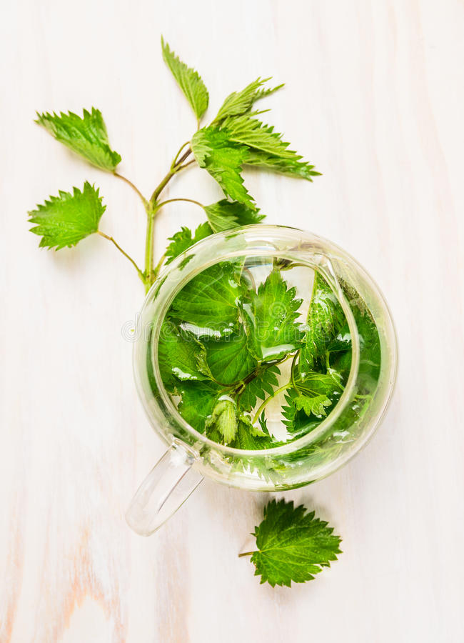 Herbal nettle tea in a glass pot on white rustic background. Top view stock image