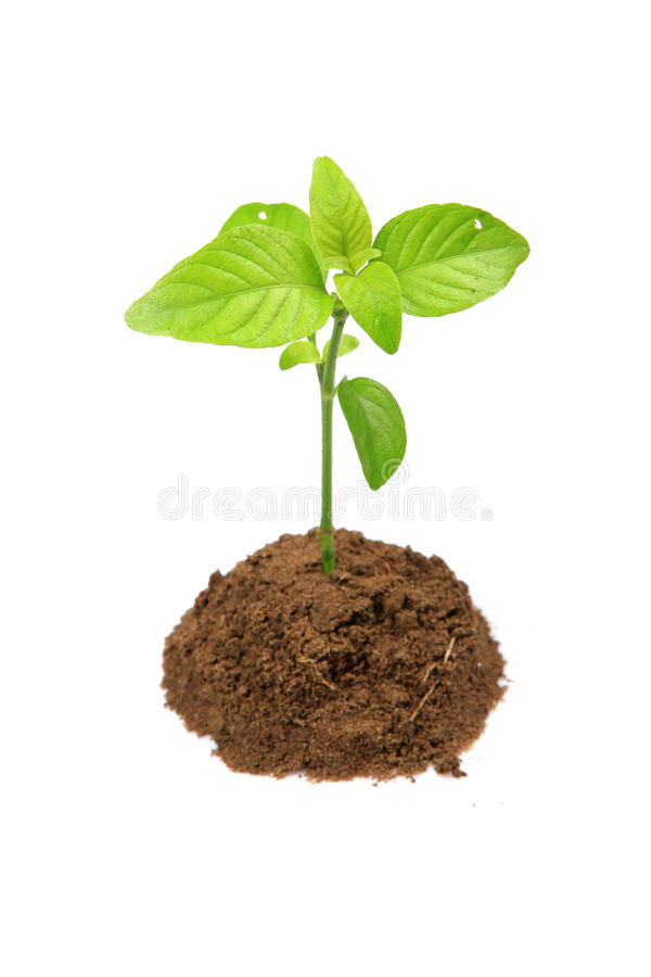 Free Herbal Plant Stock Images - 16654914