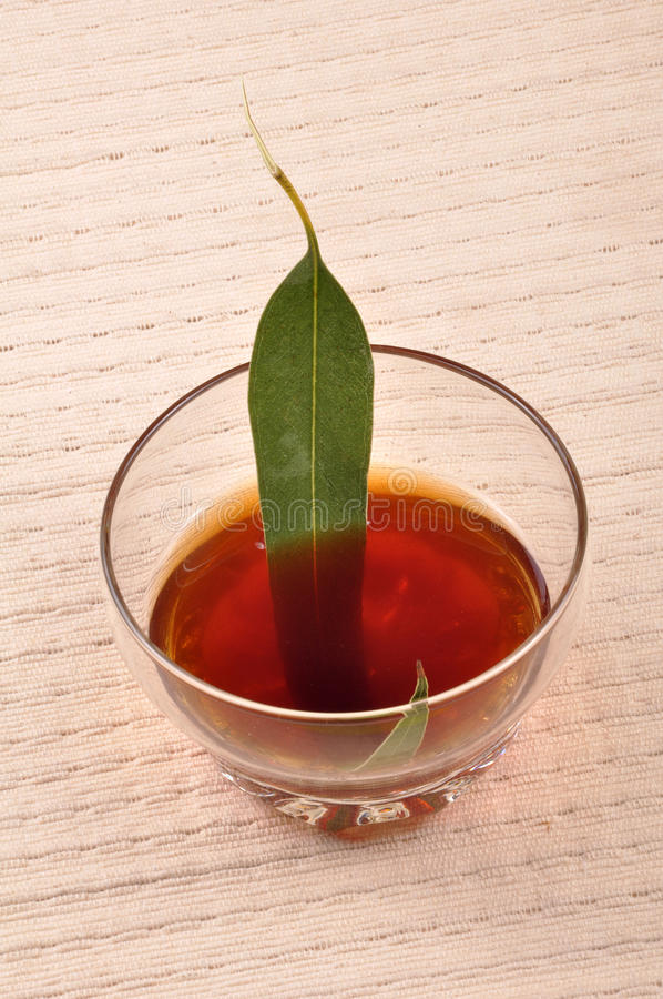 Herbal tea. Making with gum leaf stock images