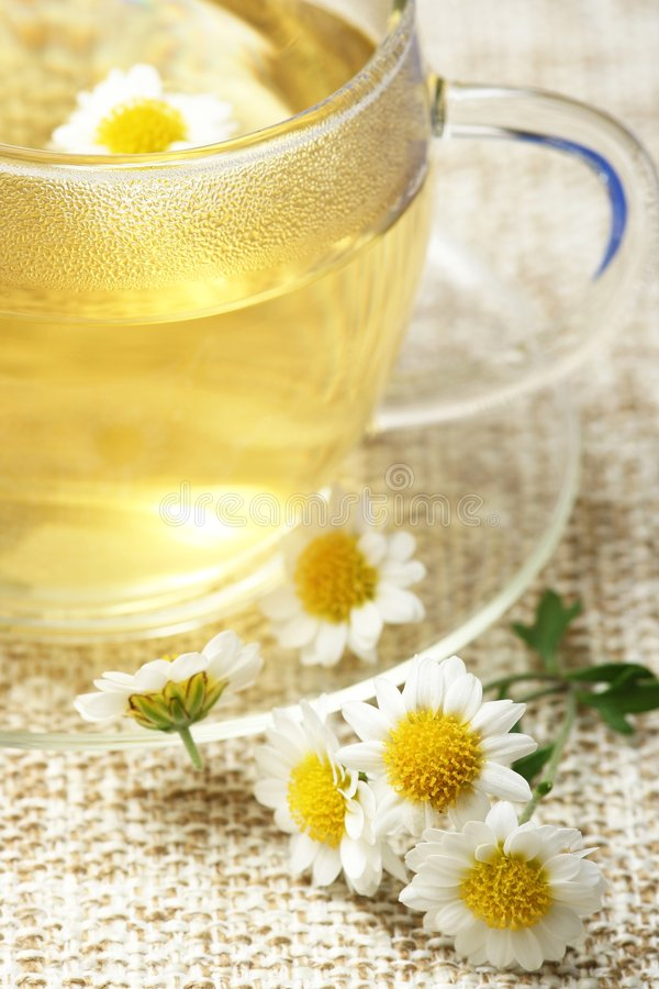Herbal tea. Detail of cup of herbal tea and chamomile stock image