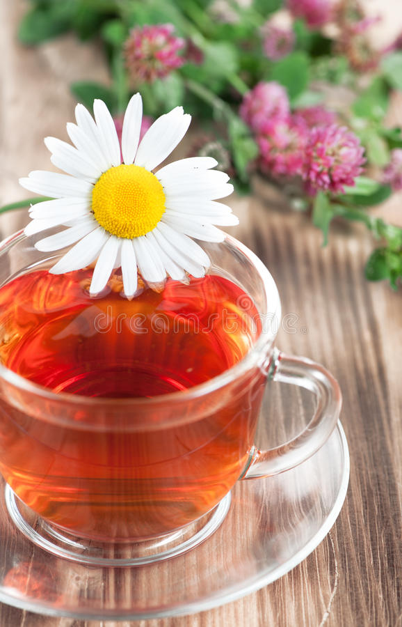 Herbal tea with chamomile and clover stock images