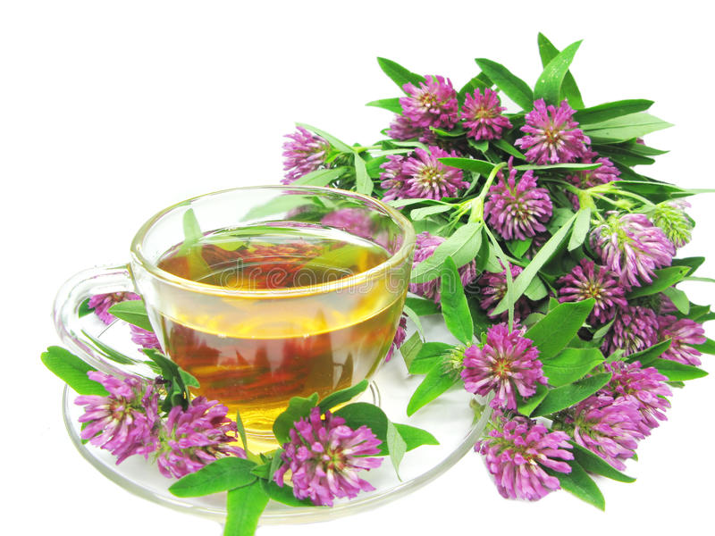 Download Herbal Tea With Clover Extract Stock Image - Image of heap, isolated: 14945461