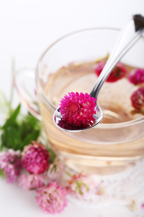 Herbal tea with clover flower stock images