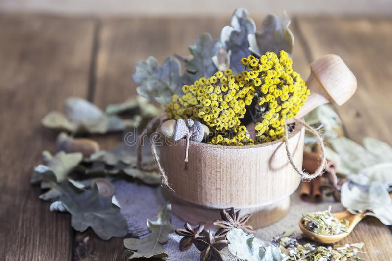 Herbal tea. Dried medicinal plant tansy in a wooden mortar, acorns and oak leaves with cinnamon and cardamom for the preparation stock photography