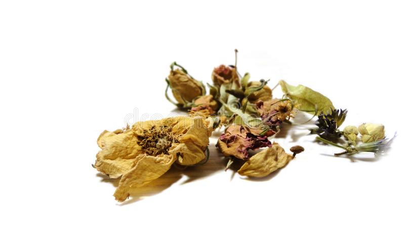 Herbal tea flowers, rose hips mint leaves healthy eating. Health treatment isolate royalty free stock photo
