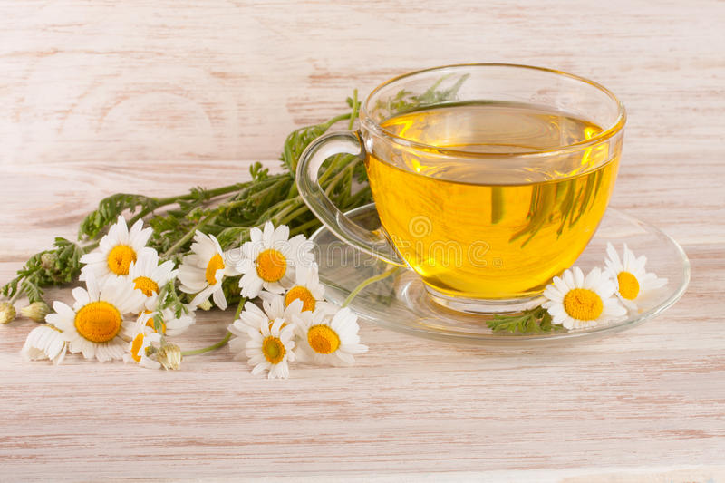 Herbal tea with fresh chamomile flowers on a light wooden background stock photo