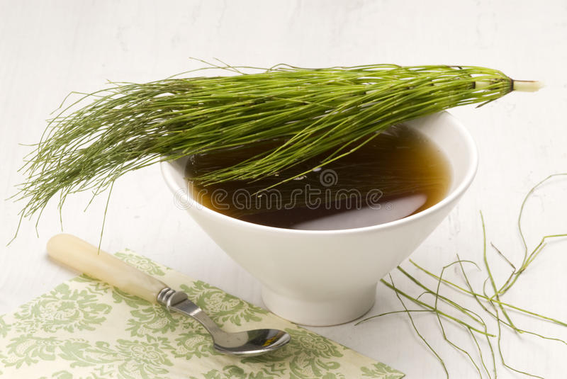 Herbal tea. Horsetail. royalty free stock image