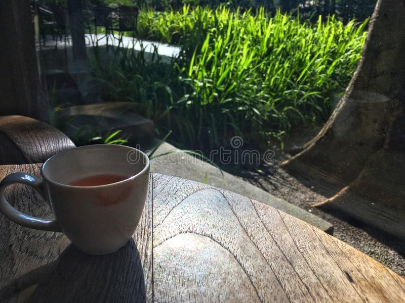 Herbal tea inside white cup on wooden table with sunshine reflection. Red lipstick color dirty on edge after woman sip the tea. royalty free stock photography