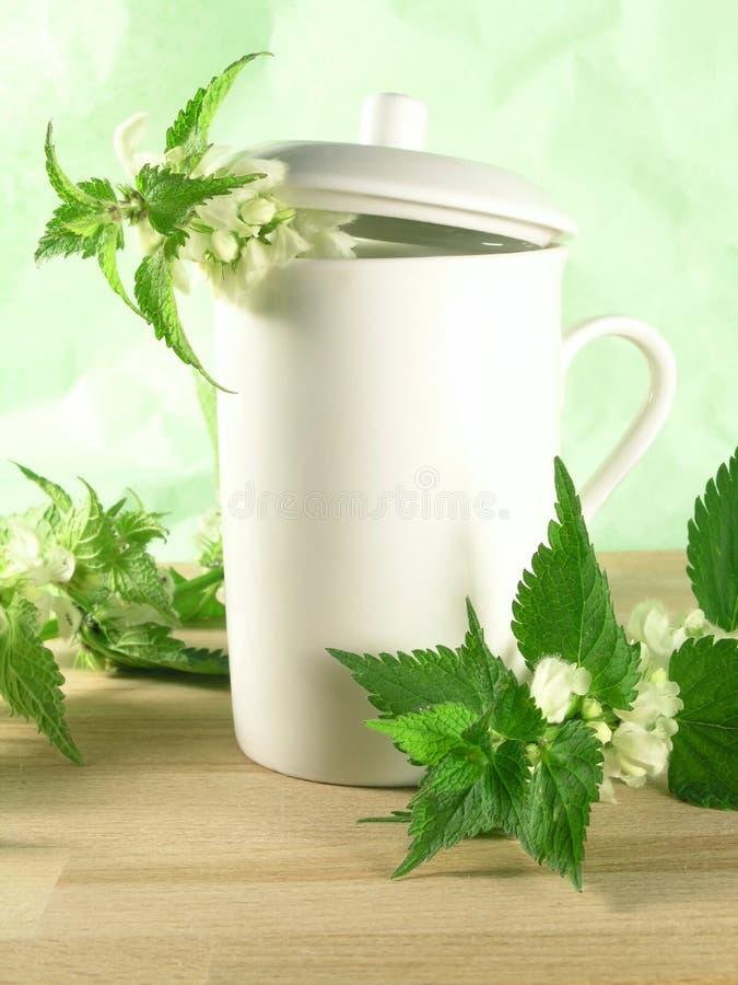 Herbal tea - nettle stock images