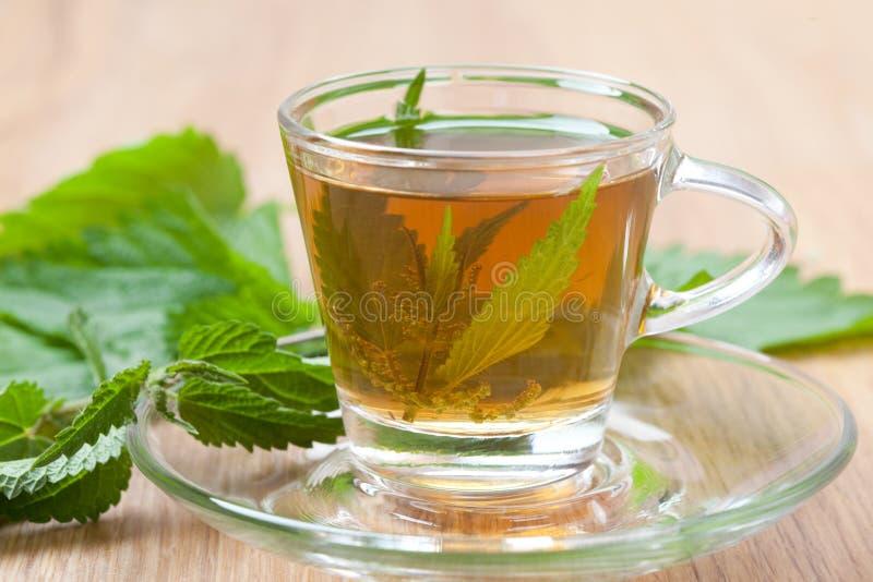 Herbal tea with nettle blossom inside teacup, stinging nettle tea stock photo