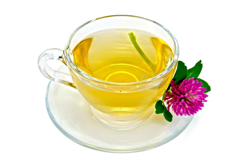 Herbal tea with a one clover royalty free stock images