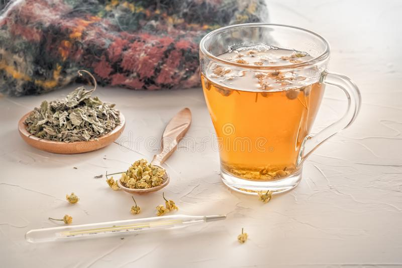 Herbal tea with pharmaceutical chamomile, warm scarf and medical thermometer on a  table royalty free stock images