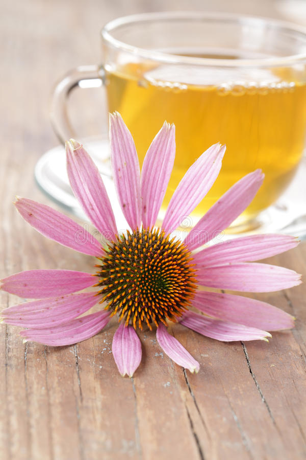 Herbal tea and purple coneflower royalty free stock images