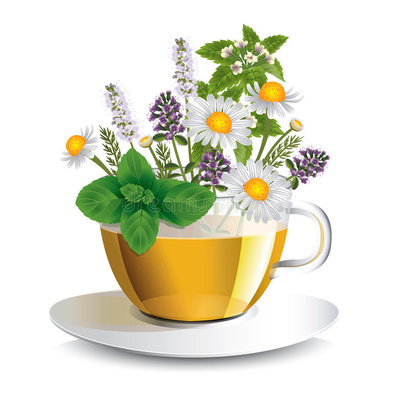 Herbal tea in a transparent cup with aromatic herbs. A conceptual idea for the label vector illustration