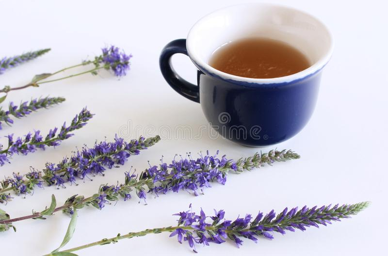Herbal tea from Veronica for herbal medicine and the flowers on white wood background. . Minimalism. Beautiful autumn royalty free stock image
