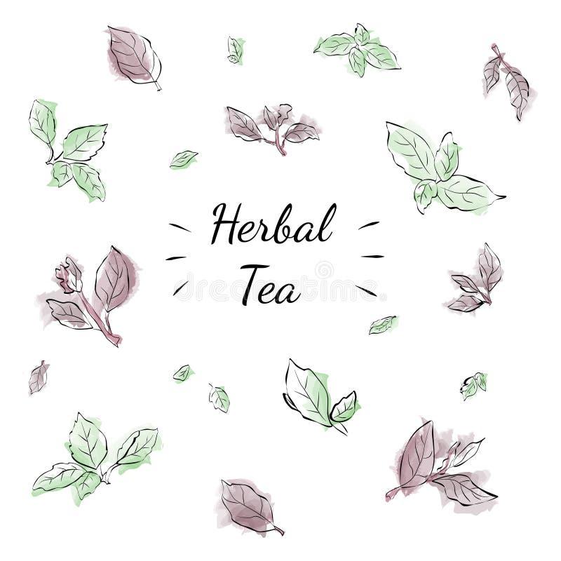 Herbal Tea royalty free stock photos