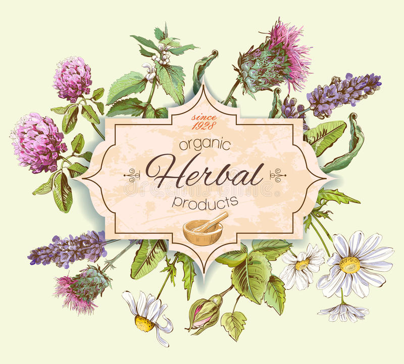 Herbal vintage banner vector illustration