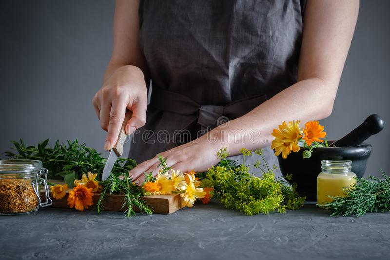 Herbalist woman chopping medicinal herbs with a knife to prepare healing medicines for treatment. Herbal medicine concept royalty free stock photo