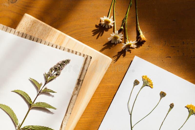 Herbario fotografía de archivo libre de regalías