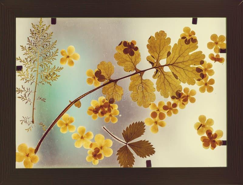 Herbarium stock afbeeldingen