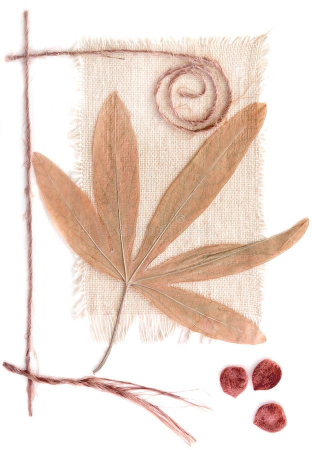 Free Herbarium Stock Photos - 11832303