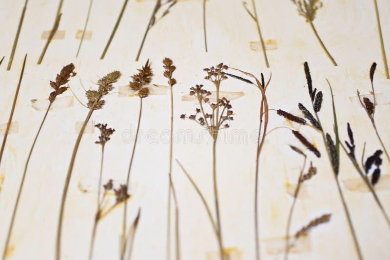 Herbarium royalty free stock photography