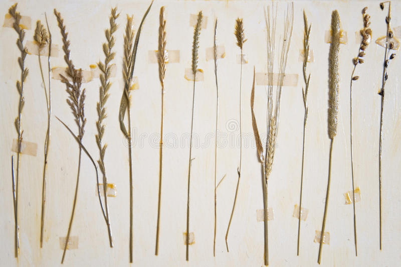 Download Herbarium stock image. Image of nature, herbaria, collage - 13450013