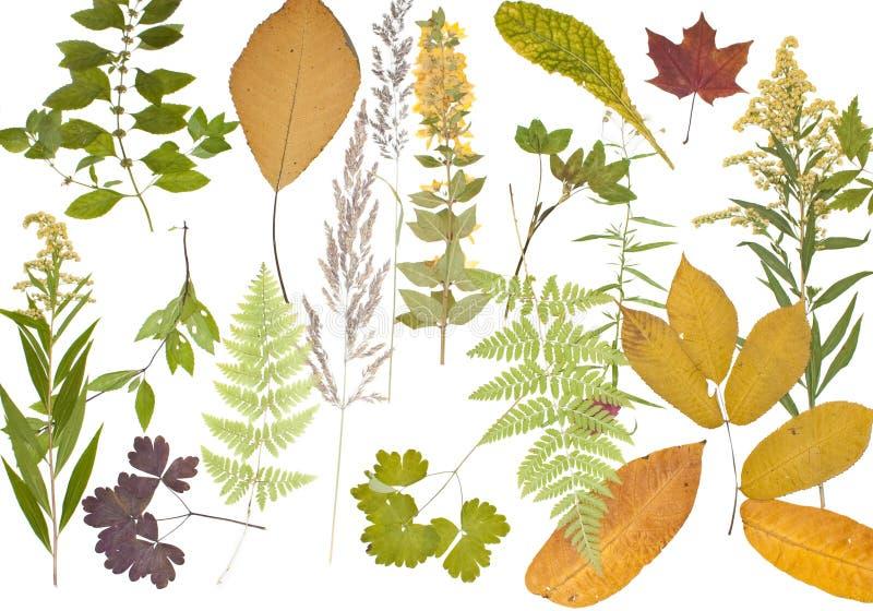 Herbarium Blätter herbarium stockfoto bild blätter blume erhaltung 14487154