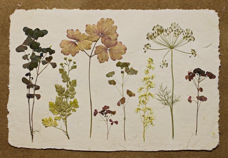 herbarium zdjęcie royalty free