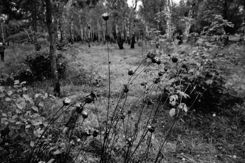 Herbarium lizenzfreie stockbilder
