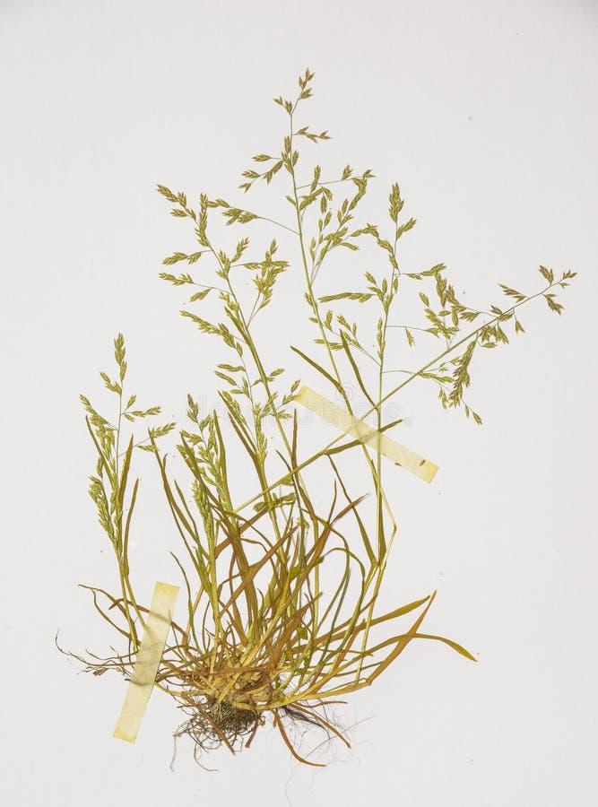 Herbarium obrazy stock