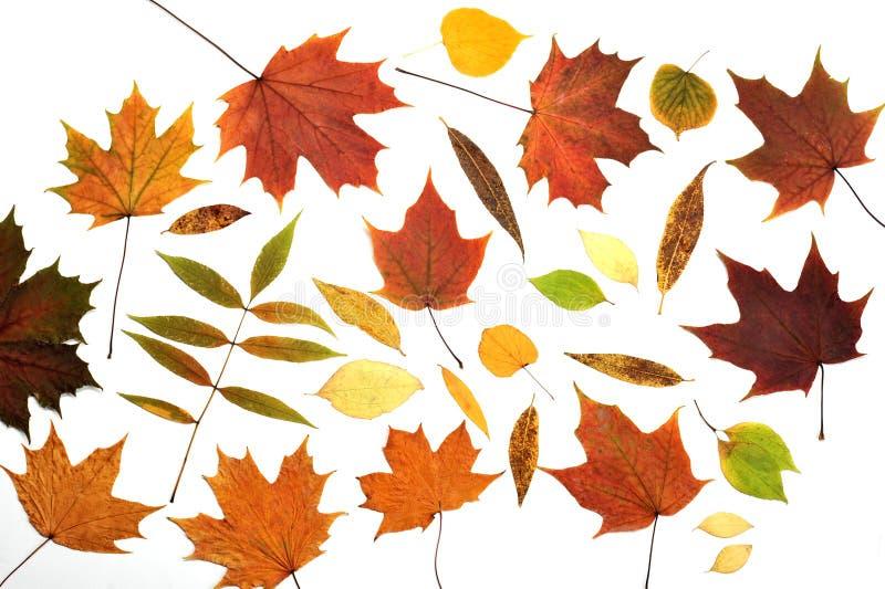 Herbarium des Herbstlaubs stockfotos