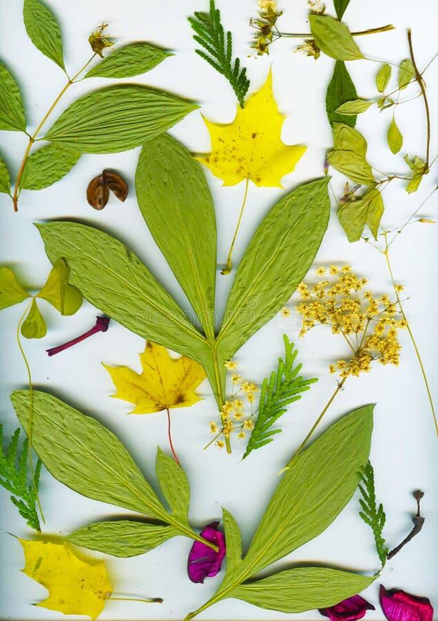 Herbarium do outono fotografia de stock royalty free