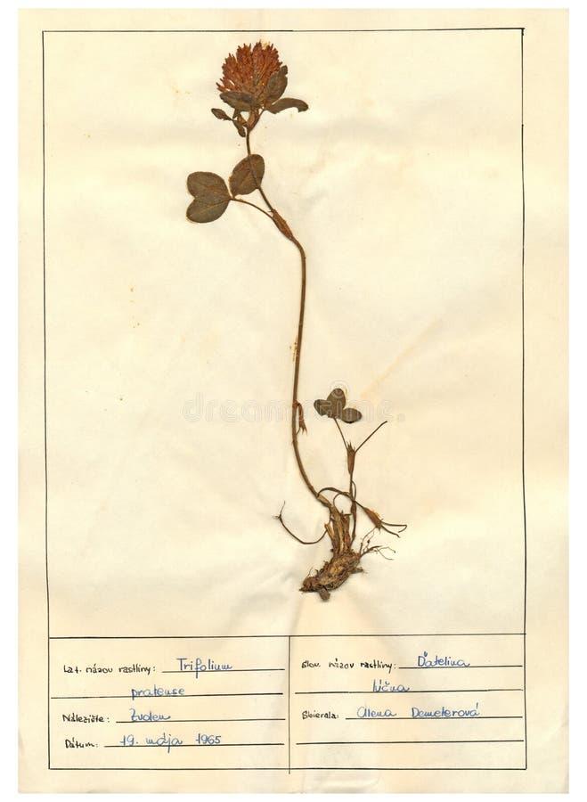 Free Herbarium Sheet - 8/30 Stock Photos - 24050293
