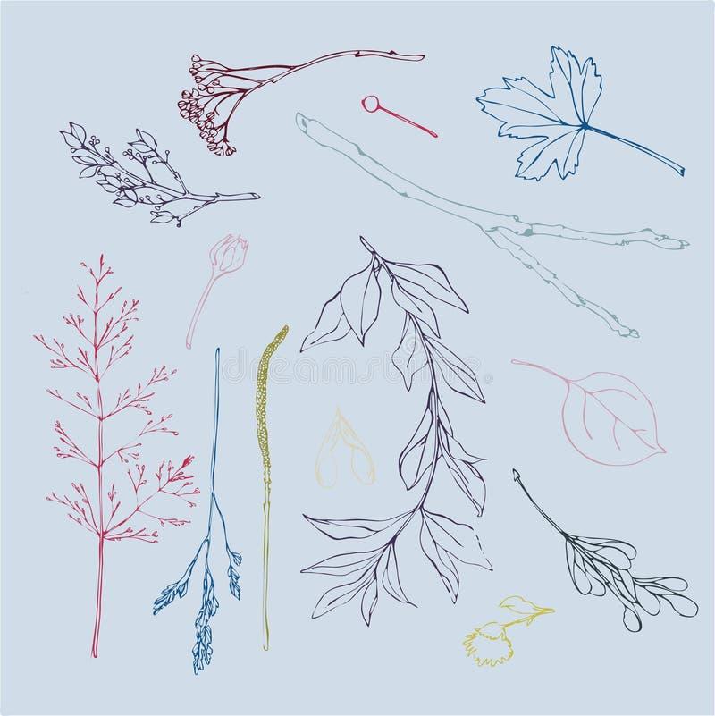 Herbarium van met de hand getrokken bladeren, takken en bloemen De zomer voor ontwerp wordt geplaatst dat Vector illustratie Naad royalty-vrije illustratie