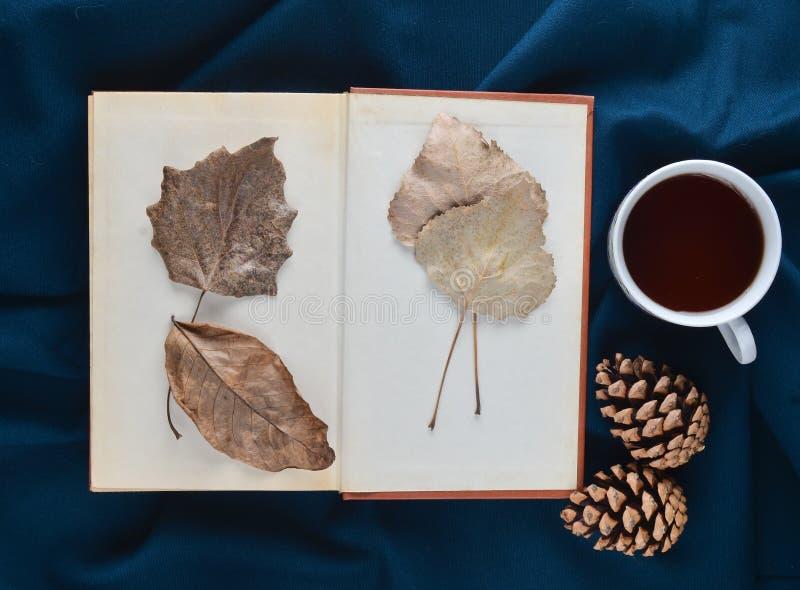 Herbarium von getrockneten Blättern in einem Buch auf einem blauen Blatt nahe bei einer weißen Tasse Tee und Kegel Drei Weihnacht lizenzfreie stockfotografie
