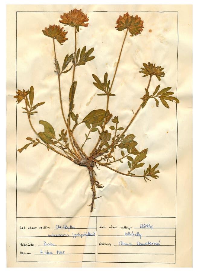 Herbariumblatt - 1/30 stockbilder