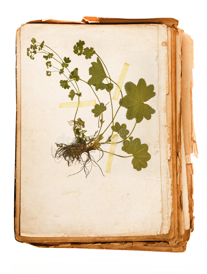 Herbariumblatt stockfotos