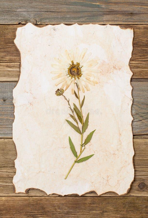 Herbariumblatt mit Blume lizenzfreie stockbilder