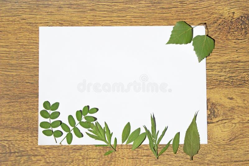 Herbariumzusammensetzung auf einem weißen Blatt Papier mit Platz für Text stockfotografie