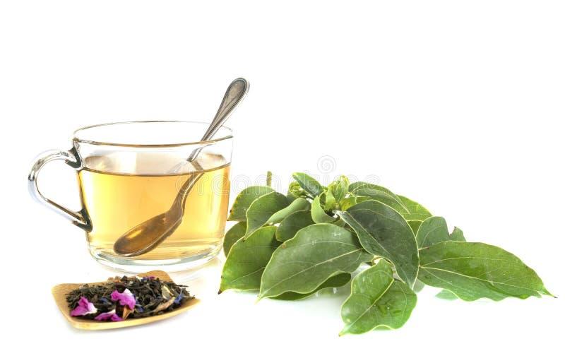 Herbata i medycyna alternatywna fotografia royalty free