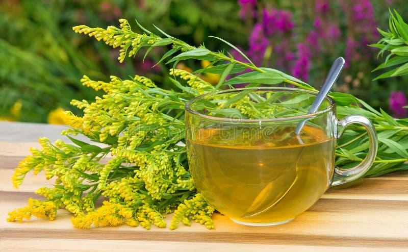Herbata lub infuzja Goldenrot lub Solidago obraz stock