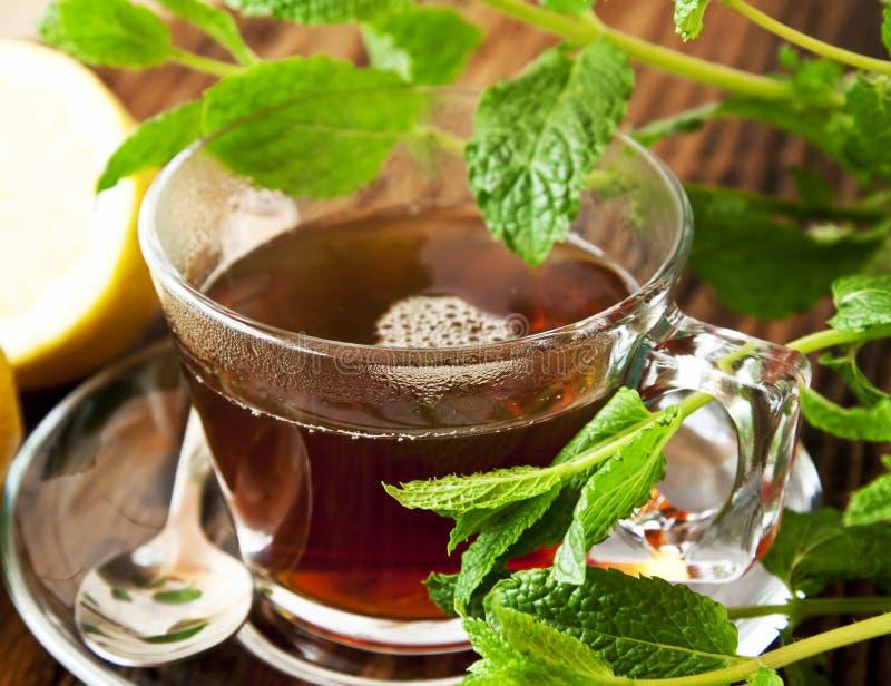 herbata miętowa obrazy stock