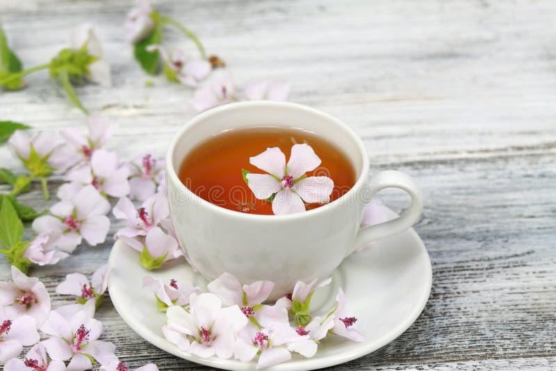 Herbata od bagno ślazu, lat Althaea officinalis obraz stock