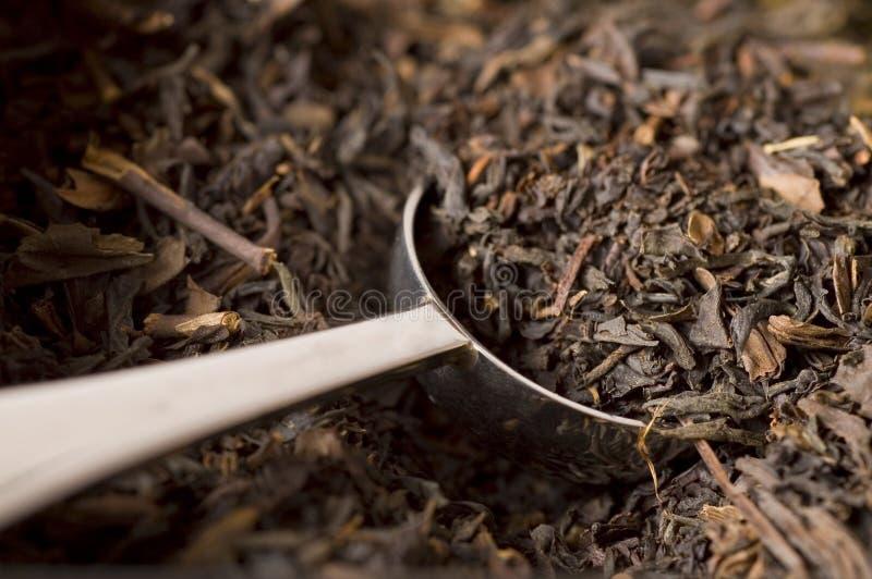 herbata scoop fotografia royalty free