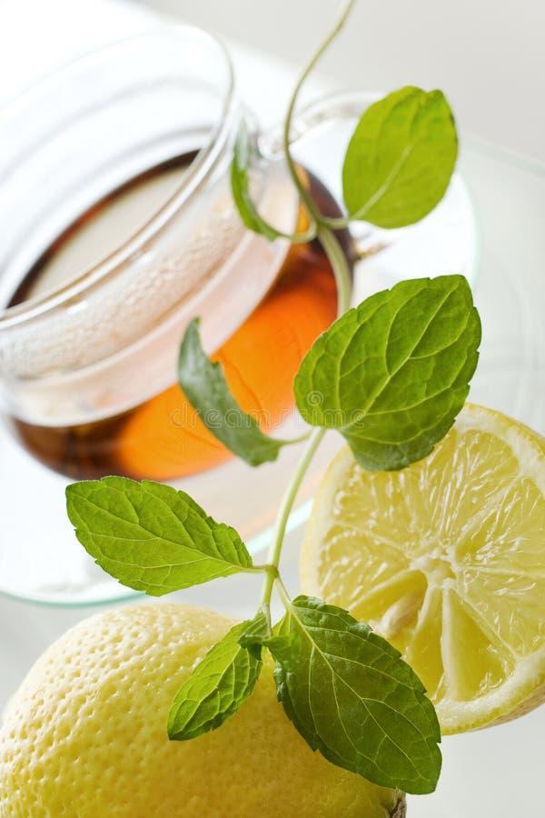 Herbata w szklanej filiżance z cytryną i świeżymi nowymi liśćmi - ziołowy h zdjęcie royalty free
