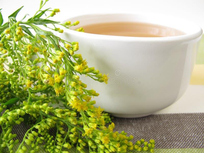 Herbata z goldenrod fotografia royalty free