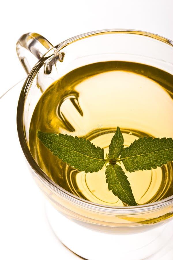 herbata ziołowa zdjęcie stock