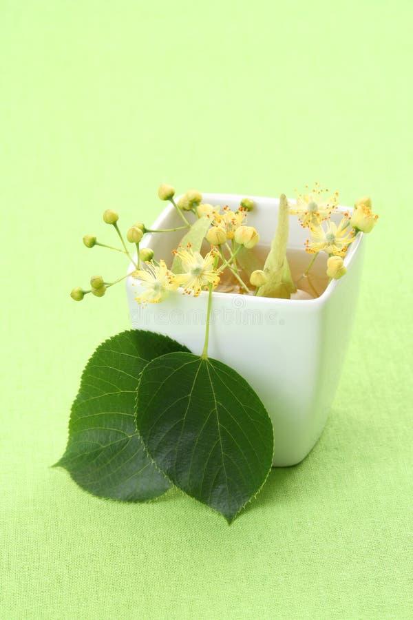 herbata ziołowa obrazy stock